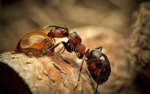 Semut Tahu Gempa Bumi Sehari Lebih Awal